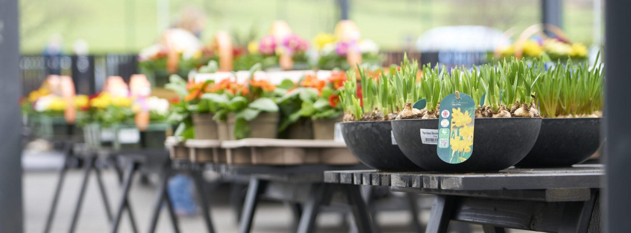 Outdoor plants 9