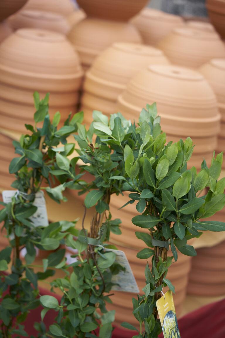 Outdoor pots 1