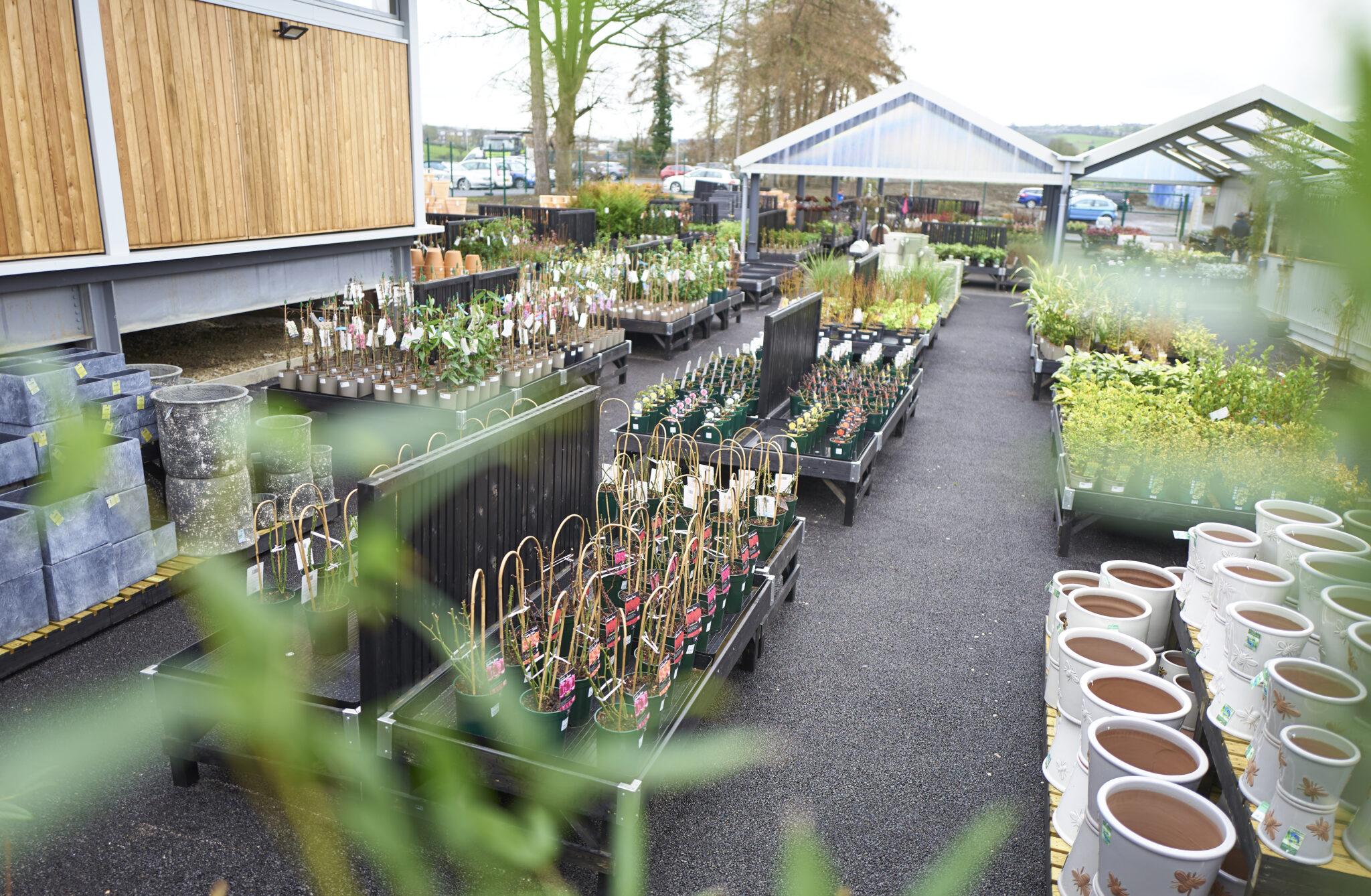 Outdoor plants 10
