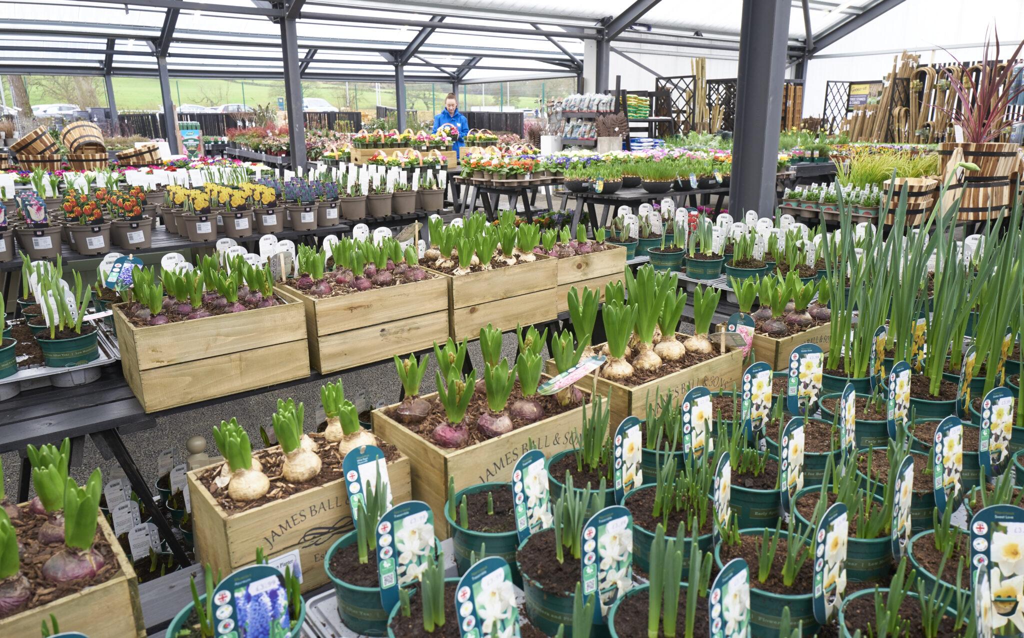 Outdoor plants 8