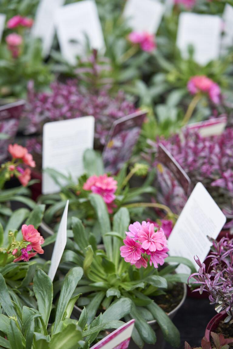 Outdoor plants 3