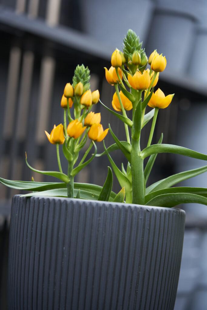 Outdoor plants 4
